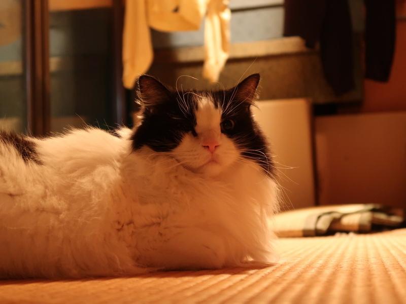 ネコ の 大き さ 自慢