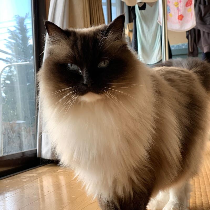 カメラ目線のアルファ猫
